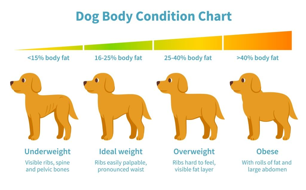 Ideal weight for your dog, here you can se how to measure it.