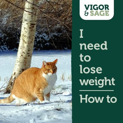 Weight loss cats